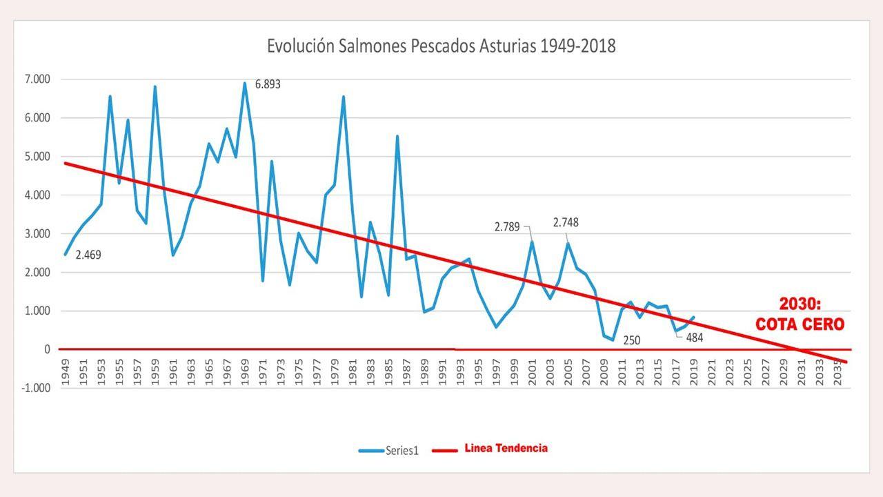 Suelta de un salmón en el río Esva.Evolución de las capturas de salmones y proyección hasta 2030