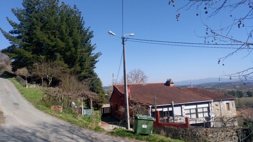 Los pinos están a diez metros de las casas y en un terraplán situado a más altura