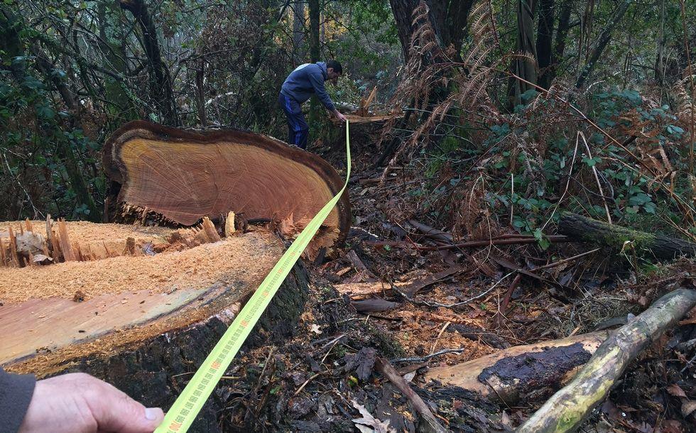 Emerxencias retiró un árbol en el vial Santiso-FilgueiraAlcalde de Cerdedo, personal de Educación y padres ven las filtraciones en el colegio.