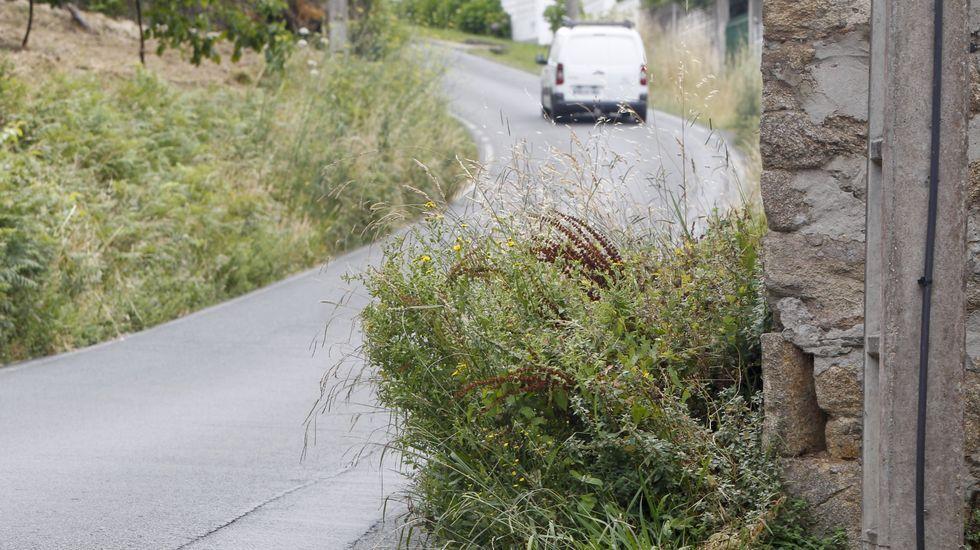Carretera sin desbrozar, en foto de archivo