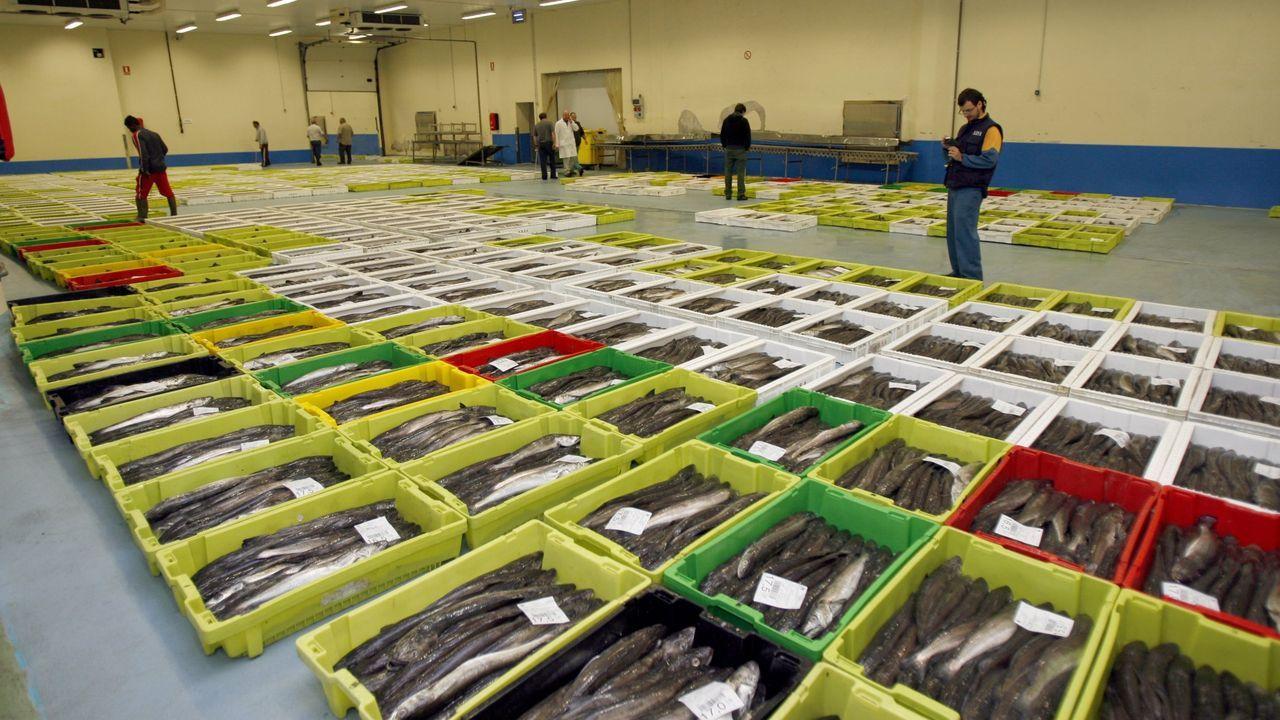 Las lonjas de Burela, en la imagen de archivo, y Celeiro distribuyeron en las últimas tres semanas 3,25 millones de kilos de pescado fresco. De ellos, un millón de kilos de merluza y dos millones de kilos de xarda