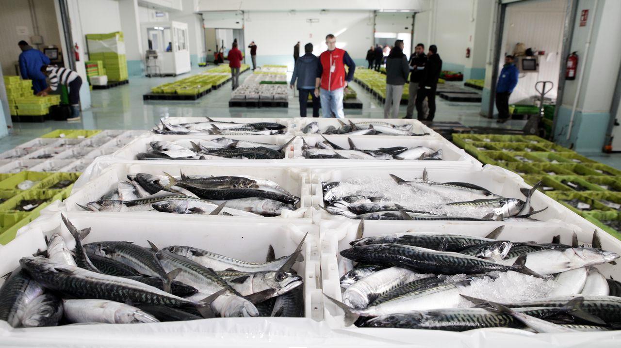 El cupo adicional permitirá alargar la duración de una de las pesquerías más rentables