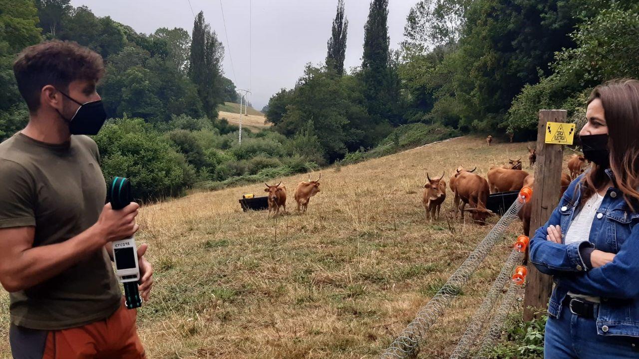 La directora de Agader, Inés Santé, visitó la explotación de vacas cachenas de Trascastro donde se estudia implantar un sistema de gestión de la ganadería extensiva basado en Internet de las cosas