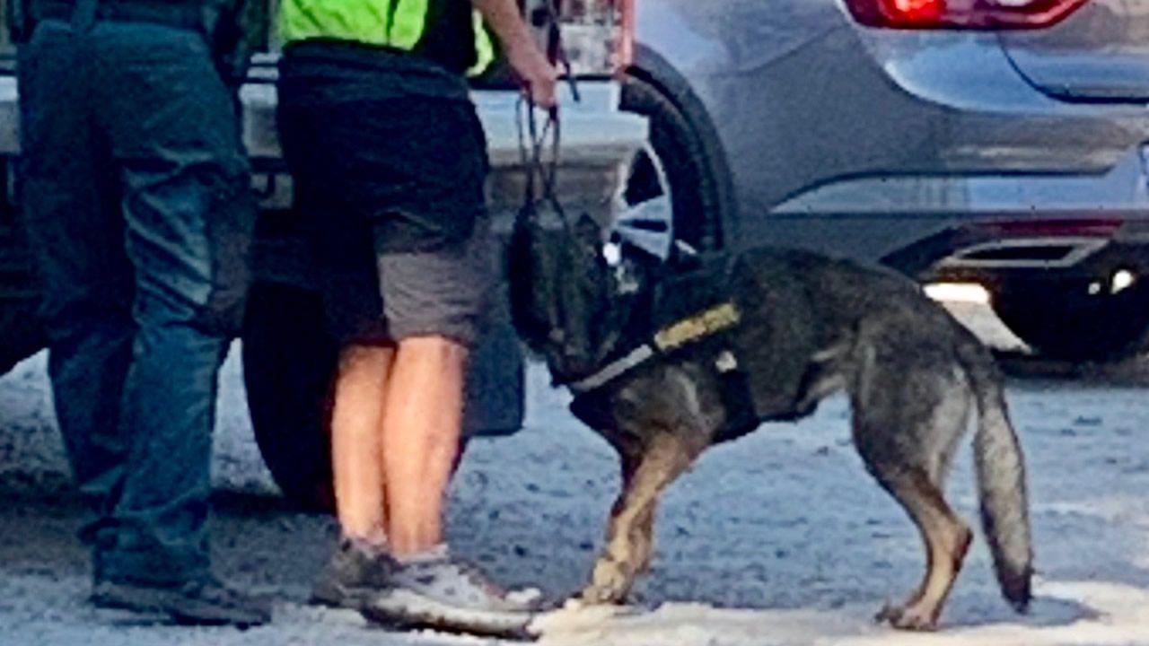Según la foto facilitada a La Voz por lo voluntarios de búsqueda, esta es Xena, la perra de raza pastor alemán de 3 años que habría dado con el cuerpo de la exesquiadora