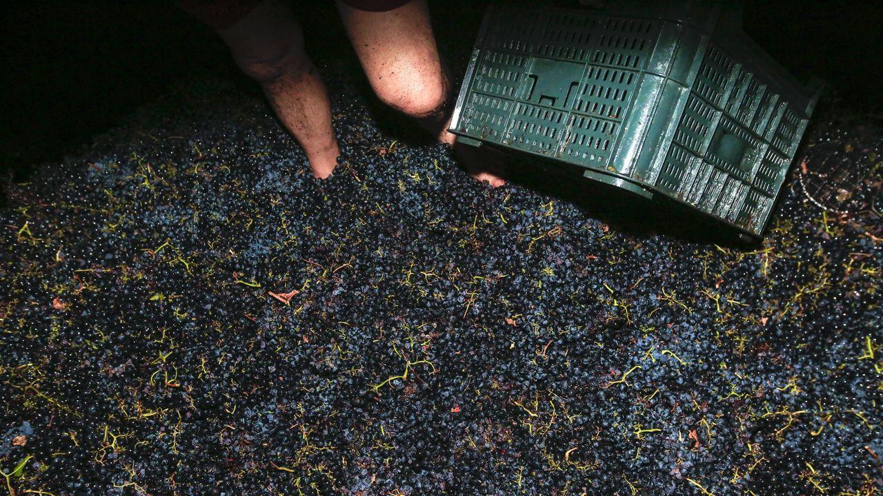 La parte vegetal del racimo, bien trabajada, aporta taninos y frescor para aligerar la madurez de la uva