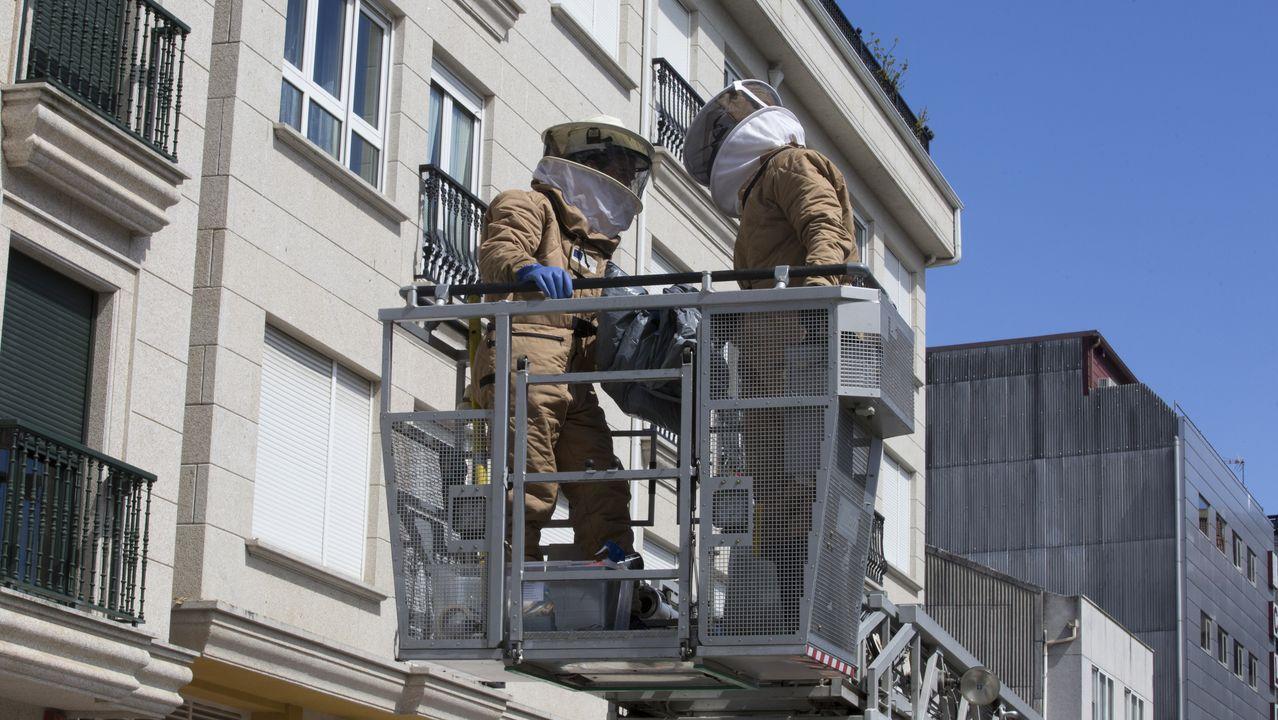 Nido de avispa asiática detectado en Gijón.Nido de avispa velutina