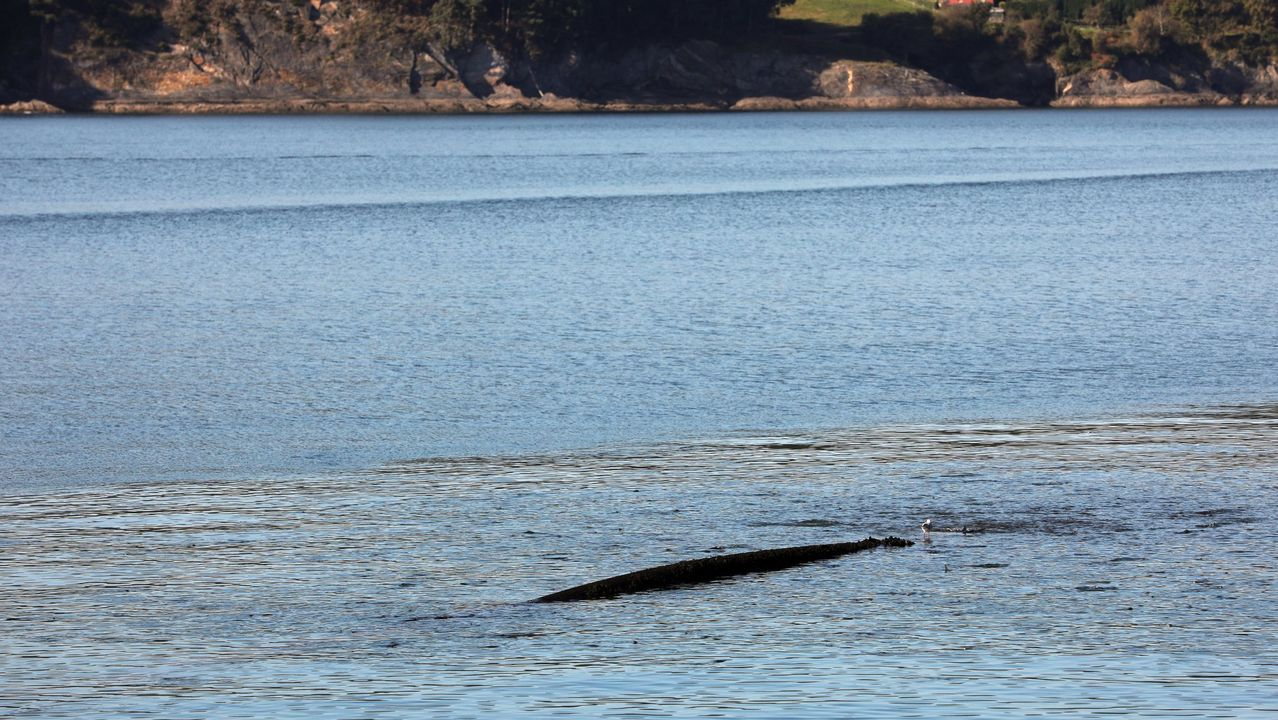 Roto en plena dársena, el emisario del alcantarillado de Celeiro vierte desde hace años aguas residuales sin depurar a la ría