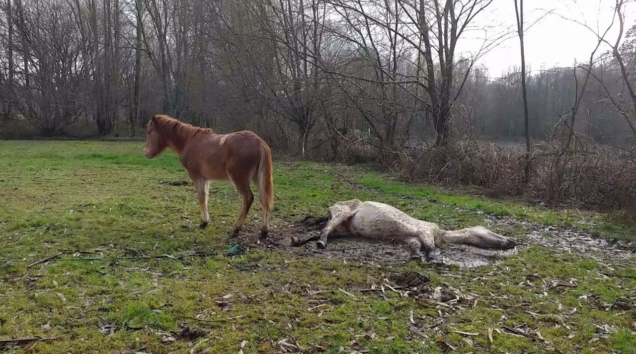 Uno de los animales estuvo varios días muerto en un prado