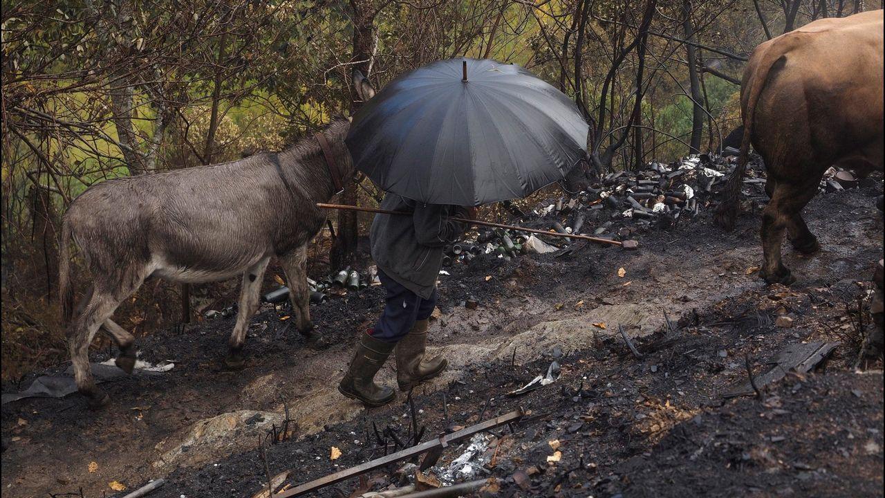 Las caras que pasan más desapercibidas del Gobierno de Rajoy.Bomberos entre el humo generado por los incendios de Degaña y Cangas del Narcea