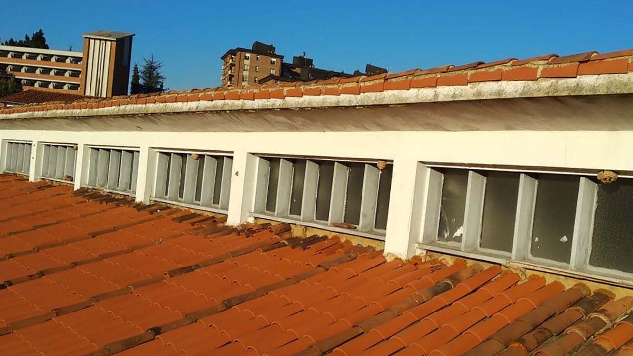 Nidos de avispa asiática en Oviedo