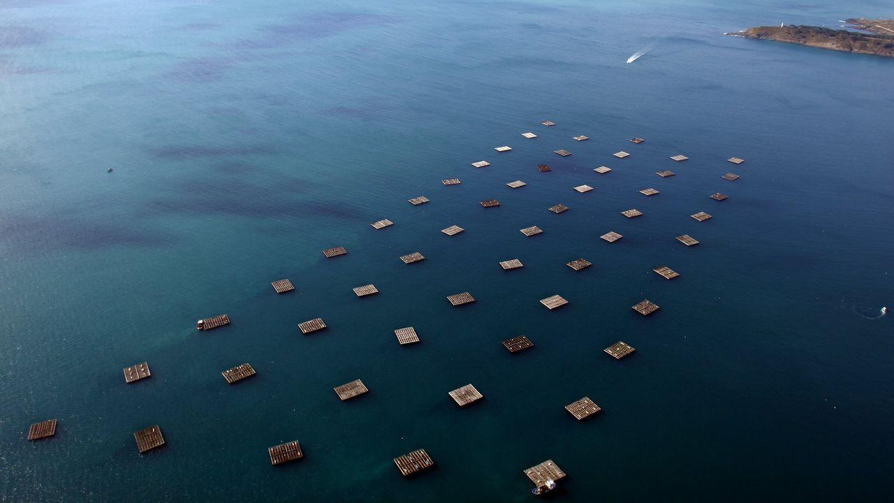 Las imágenes de la pandemia en el mundo.Vista aérea del Parque Nacional das Illas Atlánticas (Islas Atlánticas). Polígono de bateas (Batea de mejillón) de mejillones en Cangas.