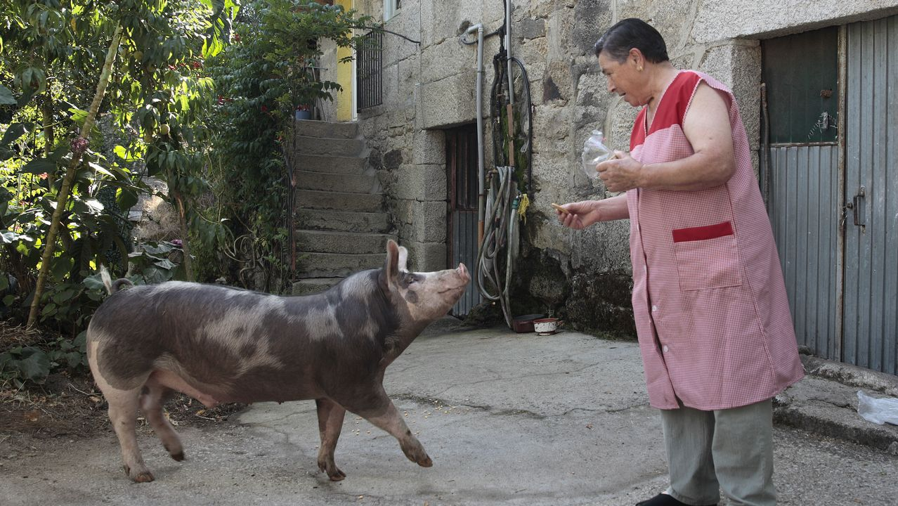 «<span lang= gl >Este porco crese un can. Ata teño que sacalo a facer pis</span>».Conde Corbal posa en la tienda de Adolfo Domínguez en Ourense, donde su imagen dejó huella