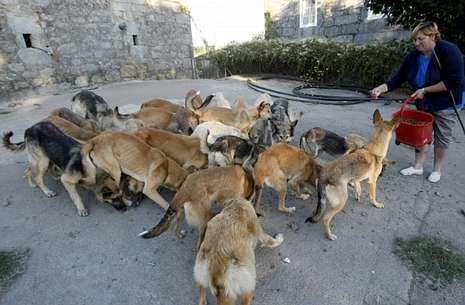 Los animales son alimentados de manera provisional por la dueña del terreno y algún vecino.