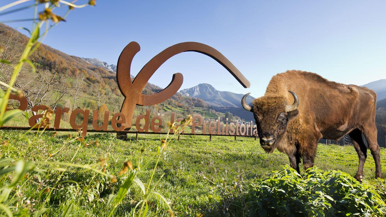 Bisonte en el Parque de la Prehistoria