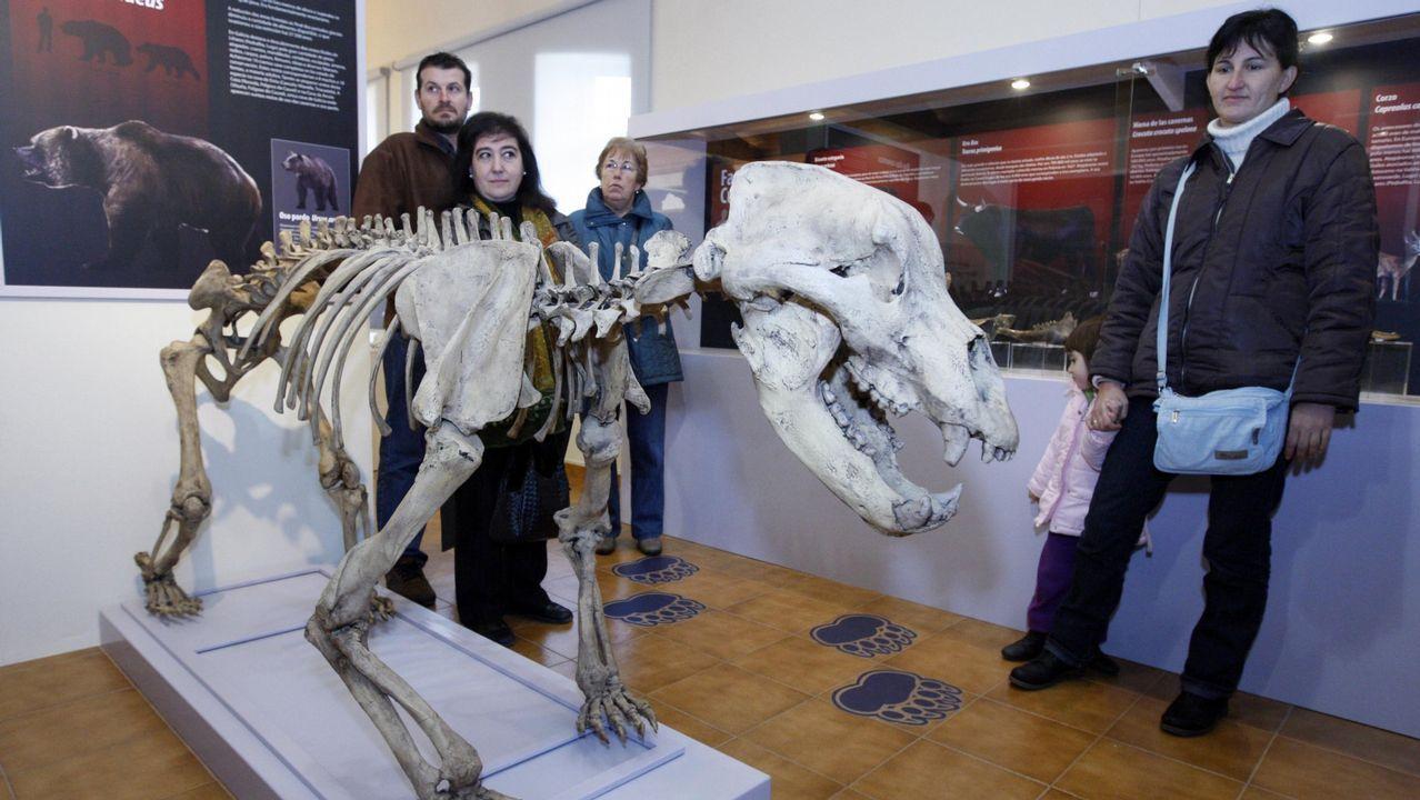 Un eurodiputado italiano pisotea los papeles de Moscovici.El estudio demuestra que un oso cavernario de Cova Eirós y un oso pardo de Austria tuvieron antepasados comunes. Sobre estas líneas, réplica de un esqueleto de oso cavernario en el museo geológico de Quiroga