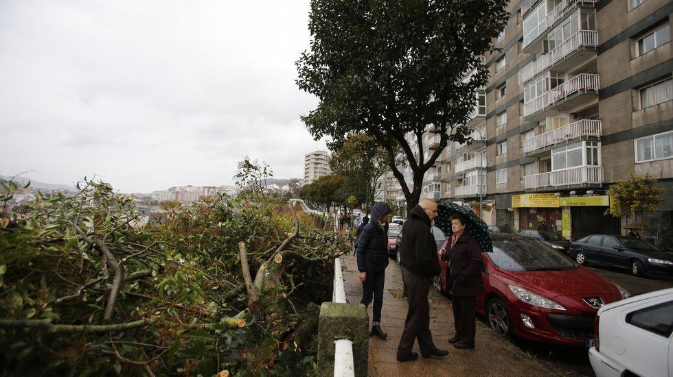 Árbol roto en Vigo.