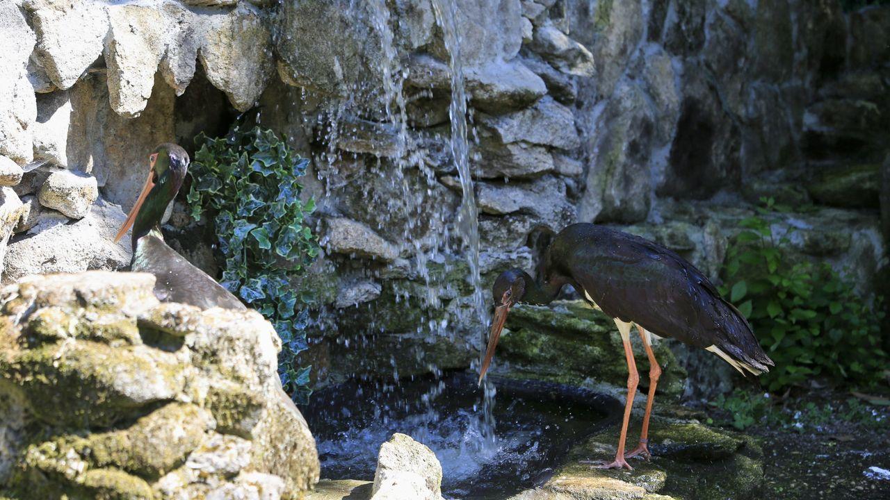 En Avifauna se pueden ver aves de unas 150 especies originarias de todo el mundo. Hay, por ejemplo, cigüeñas negras