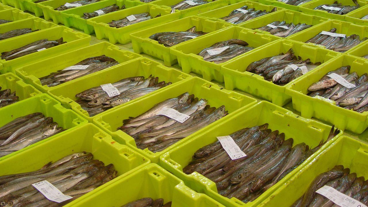 En el poderío pesquero de Celeiro y Burela es determinante la merluza de Gran Sol, pues de cada diez que se venden en Galicia siete salen de Burela y Celeiro, donde se tomó esta imagen de archivo