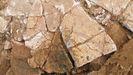Uno de los fragmentos de la decoración mural de la villa romana de la Estaca (Las Regueras). Se aprecia, en el centro, una espiga que forma parte del enmarcado de una gran pintura