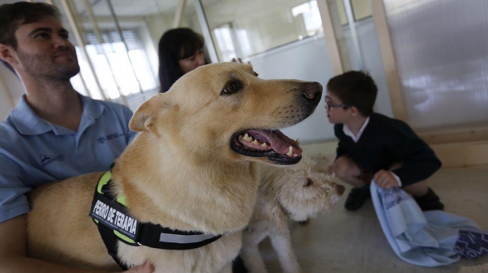 Conexión canina en la sala de espera