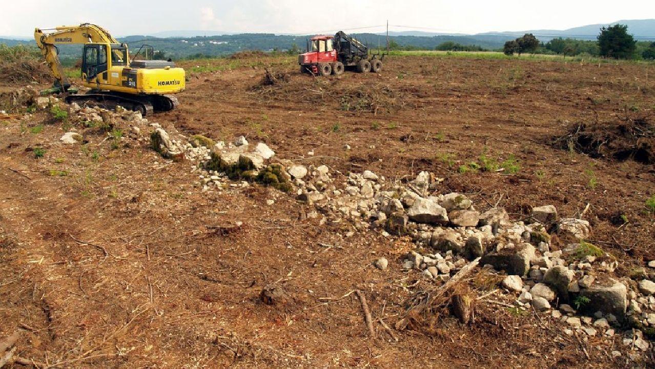 Trabajos de desbroce en los terrenos de la parroquia de Espasantes donde se lleva a cabo el proyecto vitícola