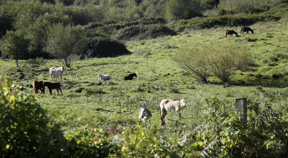 Caballos y burros ocupan actualmente las parcelas del gigante de bebidas.
