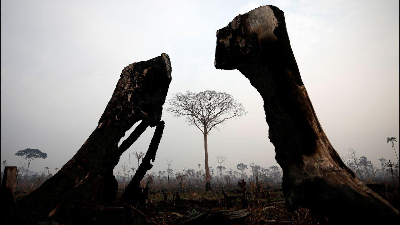 Imagen del Amazonas en Brasil