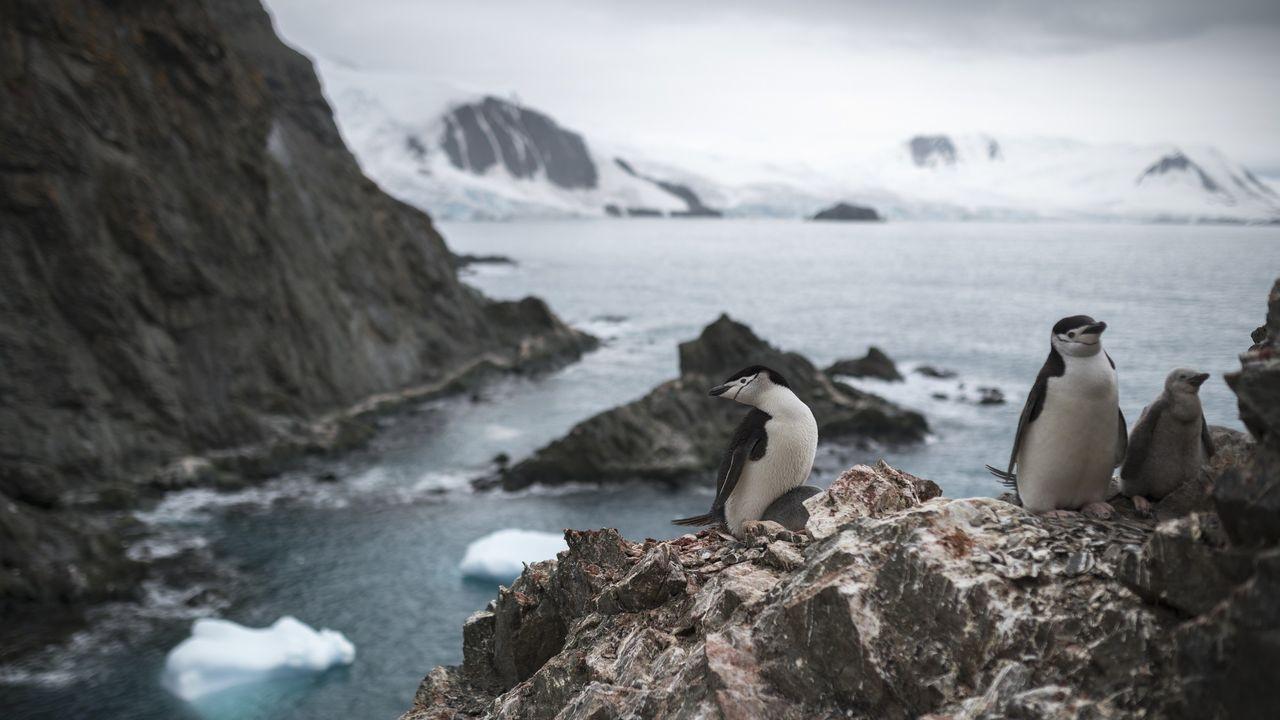 La Antártida supera los 20 grados y estos son los efectos.Los glaciares de la isla antártica de Decepción presentan grandes grietas por pérdida de hielo