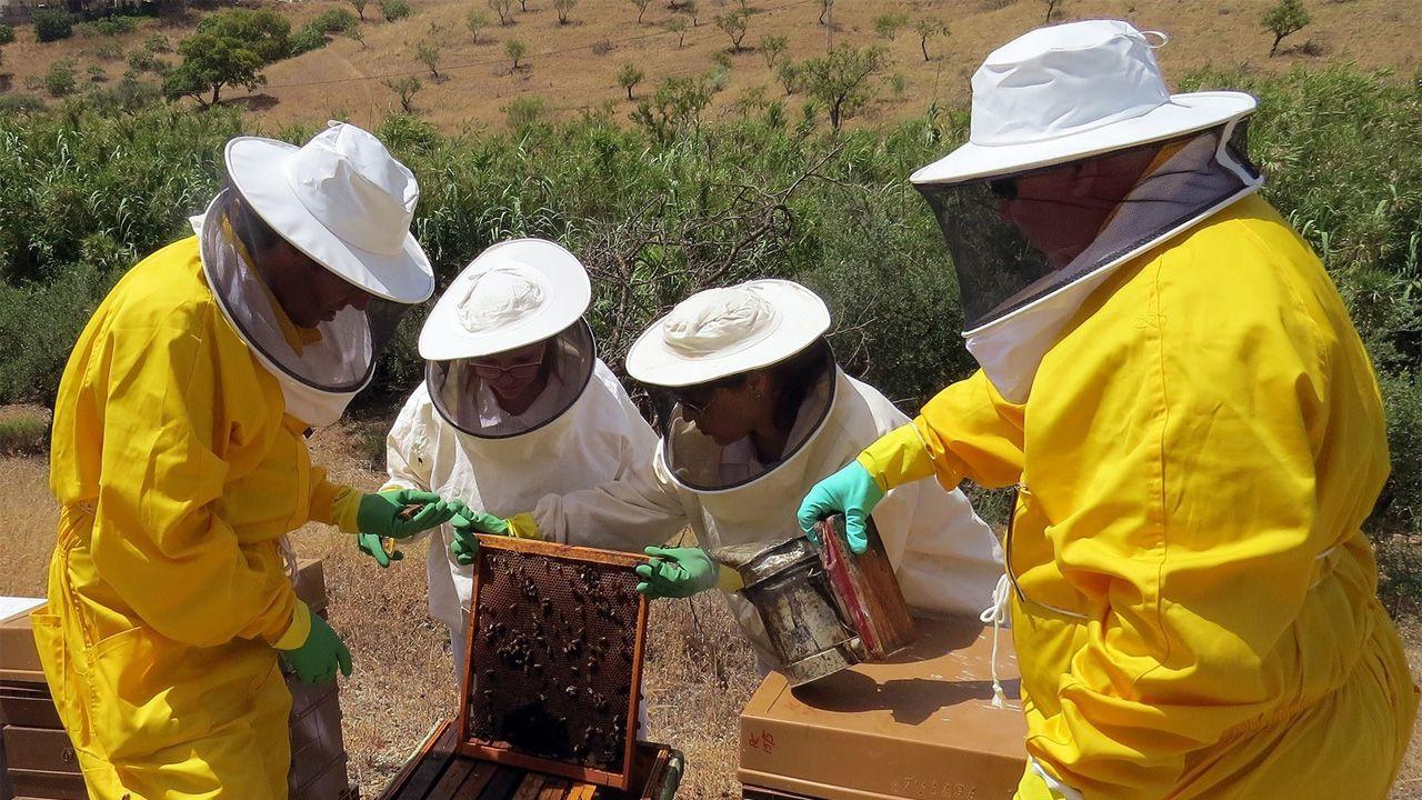 Unos apicultores con un panal