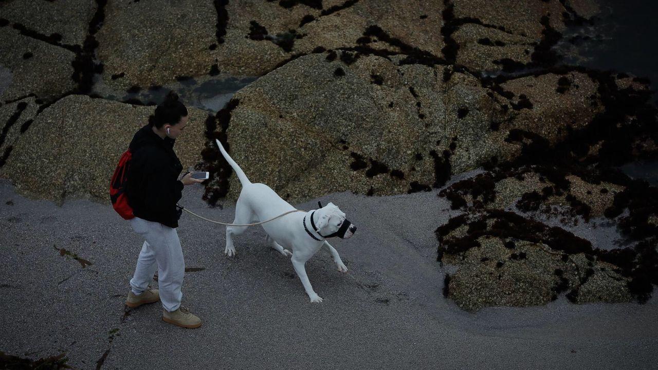 Paseos con el perro al amanecer en A Coruña