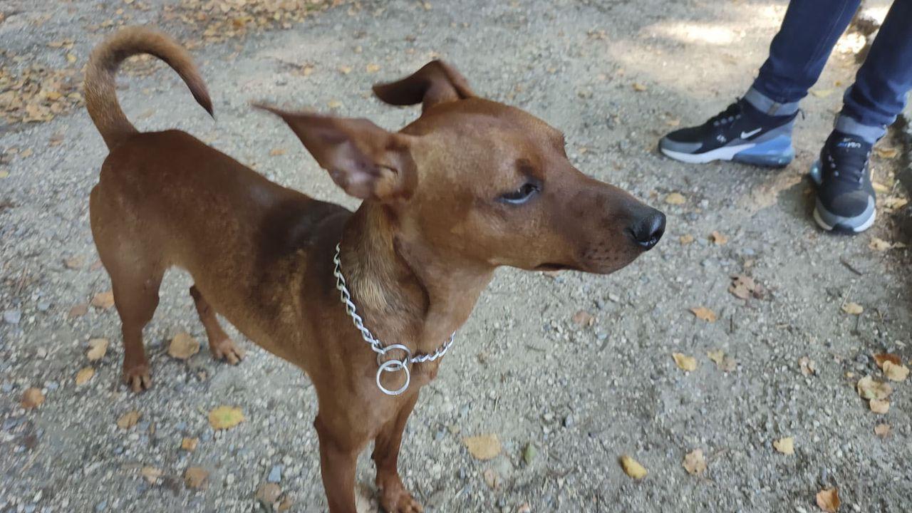 Perro rescatado gracias a la asociación Ayuda Alimentaria Animalista