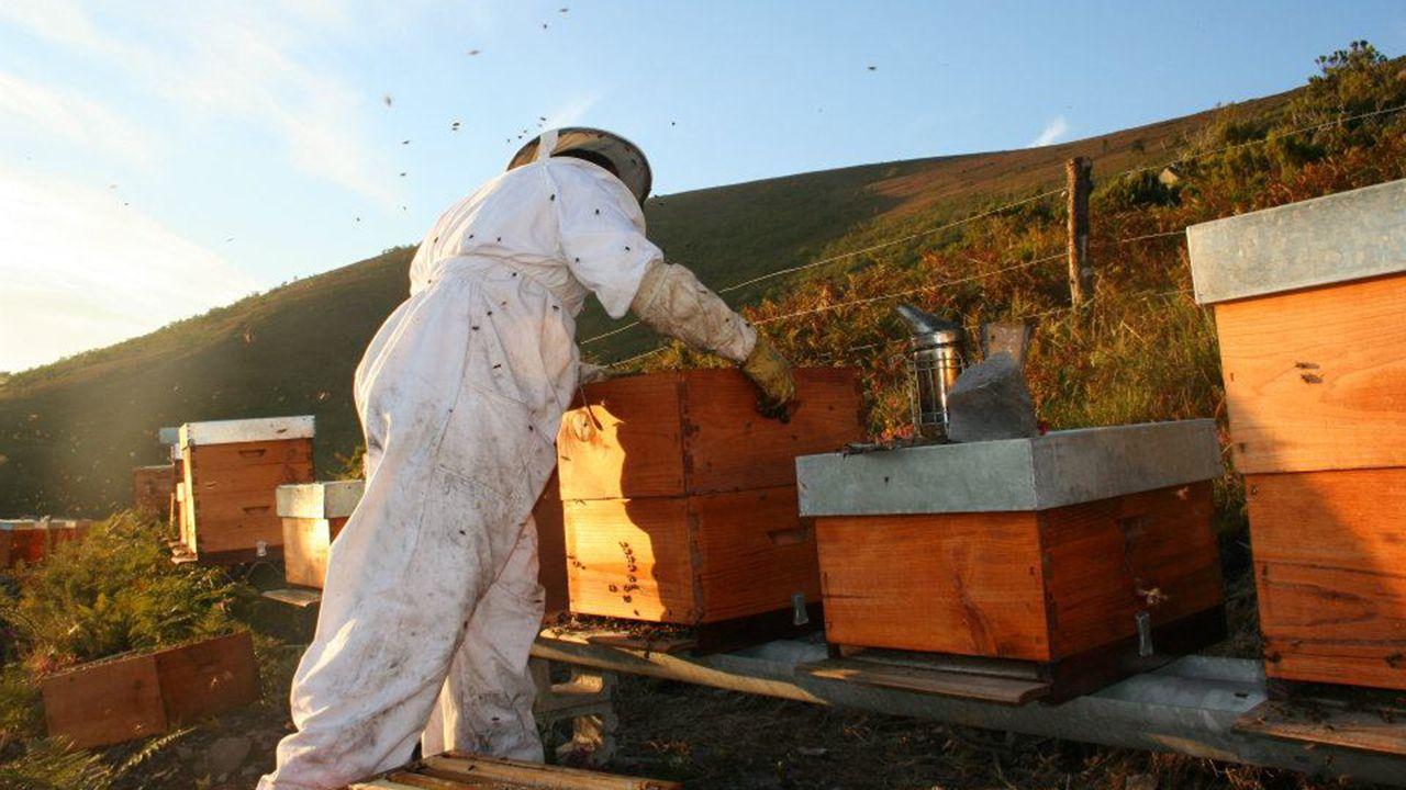 Un trabajador de las BRIF en el incendio de Seroiro, en Ibias.Un apicultor en un colmenar de abejas