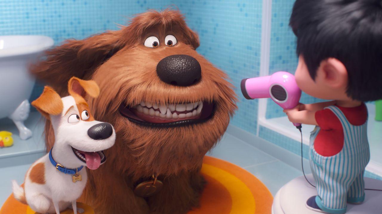 Fotograma del filme «Mascotas 2»