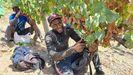 Temporeros en la vendimia en Valdeorras