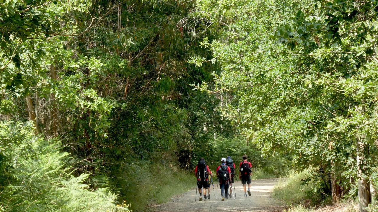 Chequeo al Camino Francés, de Arzúa a Santiago.Peregrinos a la sombra a su paso por Santiago