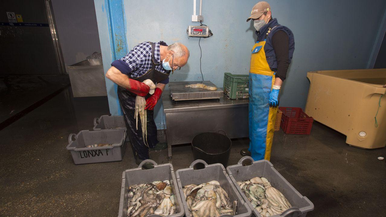 Imagen de archivo de bateeiros extrayendo la mejilla que cultivan en sus criaderos flotantes