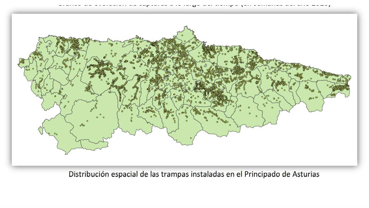 Distribución espacial de las trampas instaladas en el Principado de Asturias