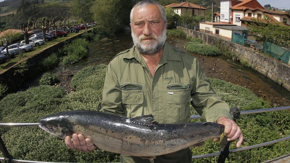 Alejandro Pérez , un experimentado pescador de Trelles (Coaña), con el  campanu  2017, un salmón de 5,790 kilos y 79 centímetros que ha caputarado en el río EO y por el que el restaurante  As de Picas  de Gijón ha pagado un total de 9.500 euros.