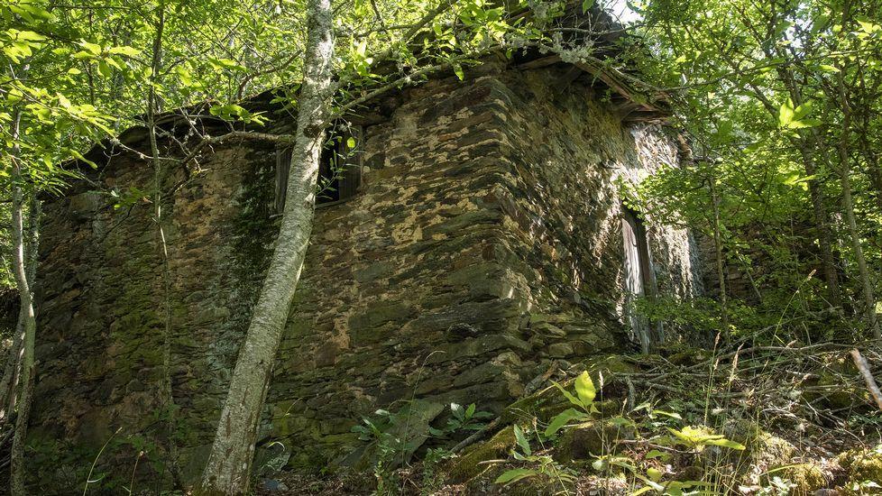 Uno de los sequeiros de castaños situados en el entorno del pueblo