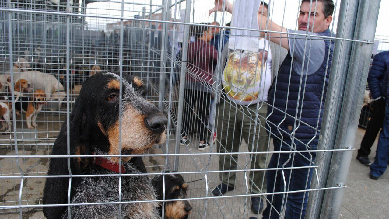 Feira de Cans de Caza de Abegondo