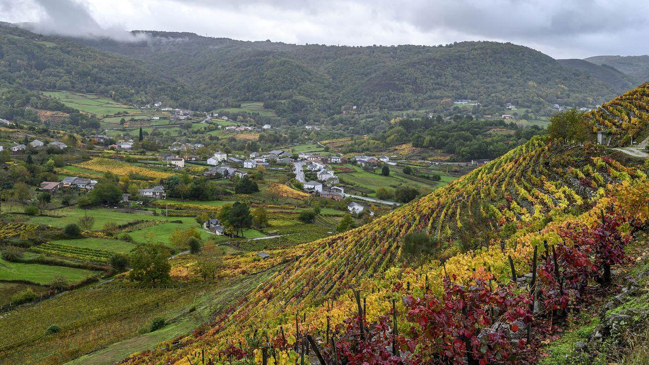 Los viñedos cubren una buena parte de las laderas que rodean el valle de Abeleda