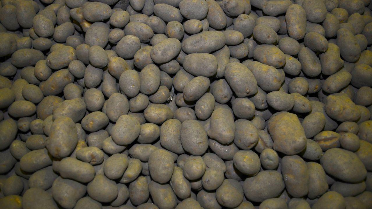 Patatas en la comarca de A Limia
