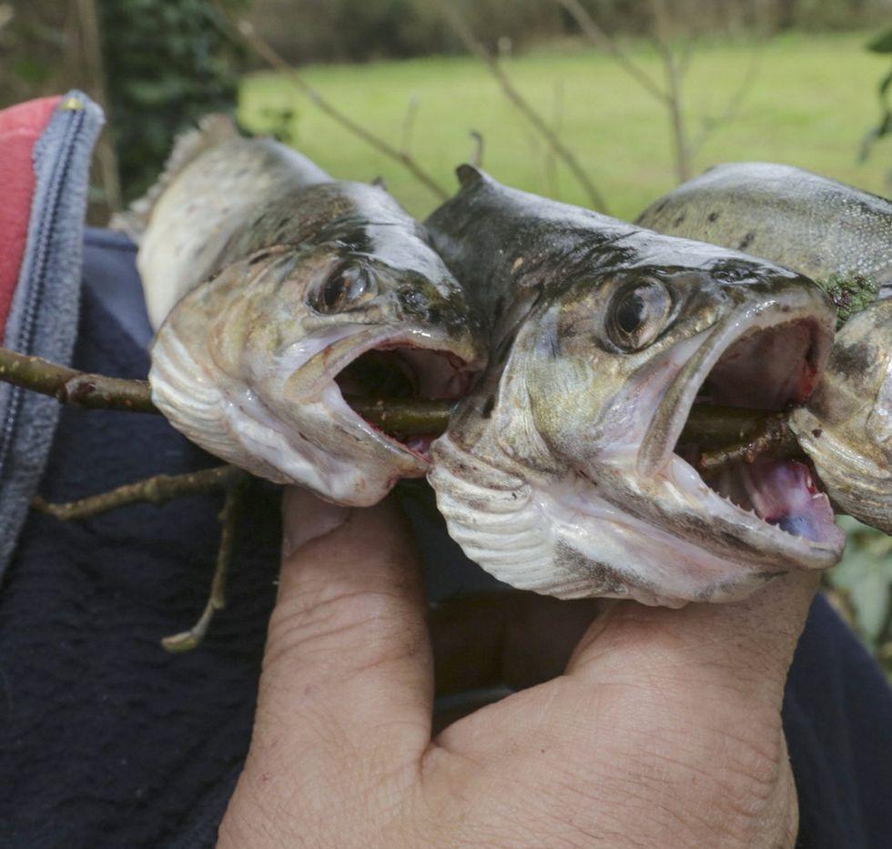 A pesca furtiva de troita non estaba mal vista.