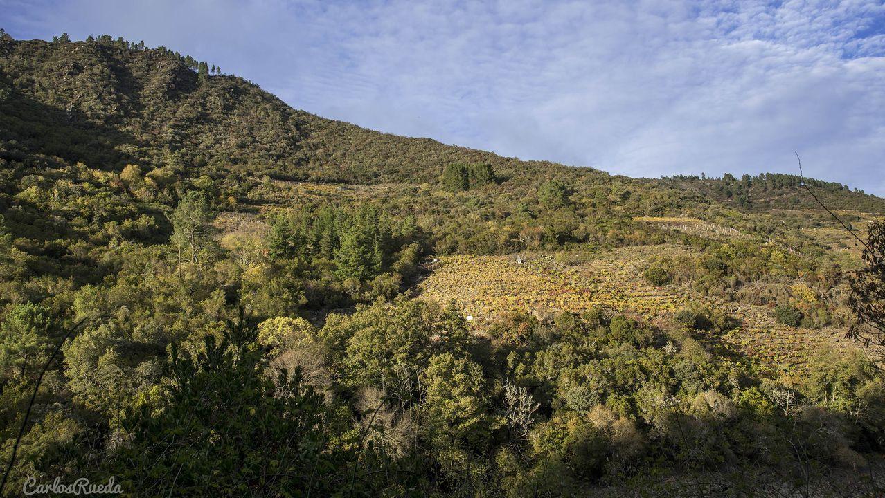 Desde el camino se avistan los viñedos de las ribeiras de Vilachá de Salvadur, situadas en la orilla opuesta del Sil y pertenecientes al municipio de A Pobra do Brollón