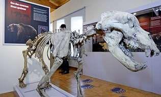 Réplica de un esqueleto de oso de las cavernas en el museo geológico de Quiroga.