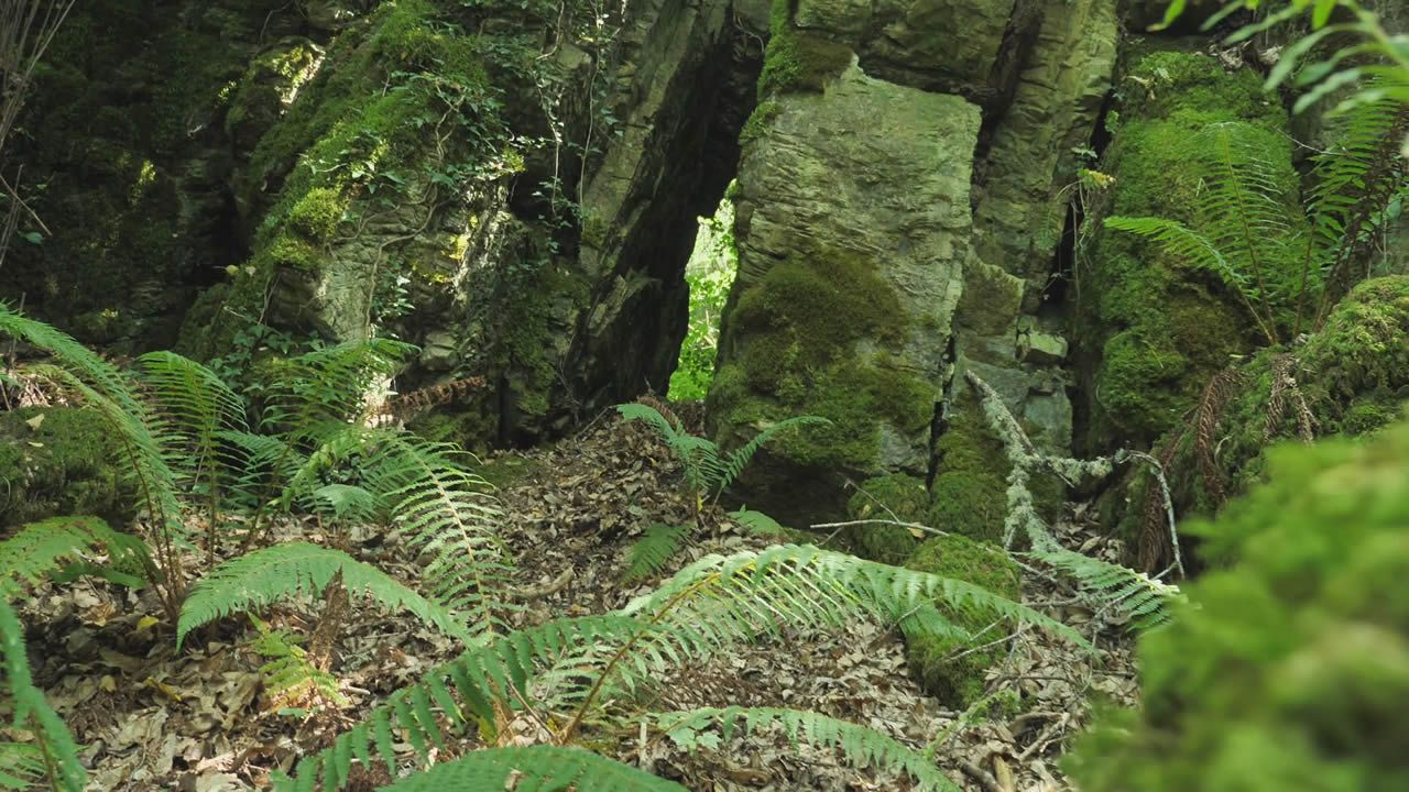 Una de las diferentes grutas que se pueden ver en el bosque