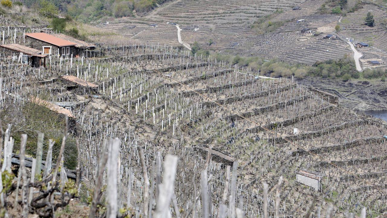 Se algo marca o territorio galego son os valados de pedra seca que separa agros e leiros