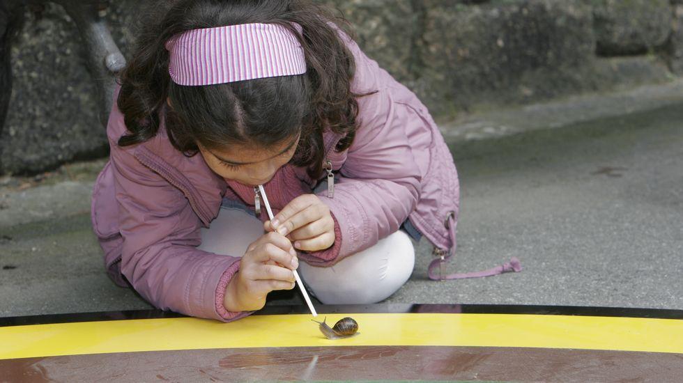 Tradicional carrera de caracoles en una de las pasadas celebraciones del  Día de la Ciencia en la Calle