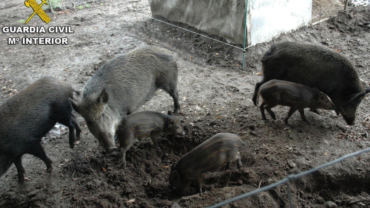 La Fiscalía pregunta si matar animales por el rito halal causa más sufrimiento