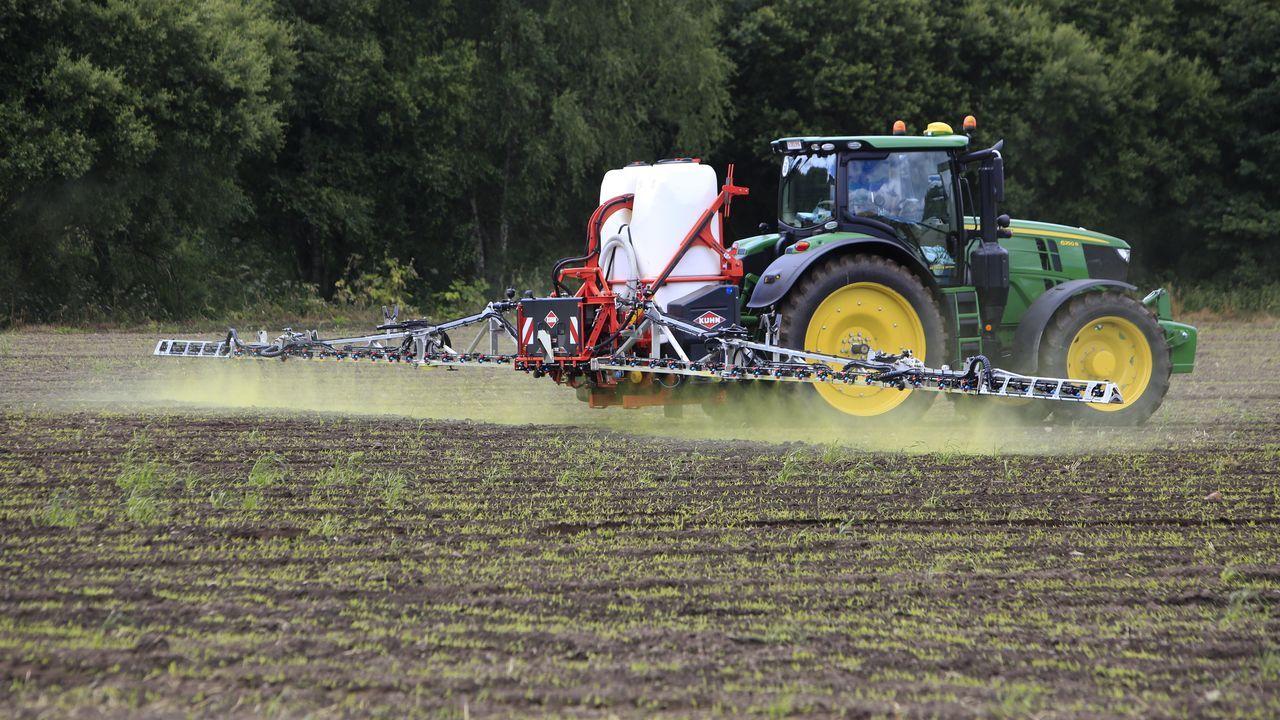 Un tractor aplica el herbicida sobre el campo sembrado de sorgo